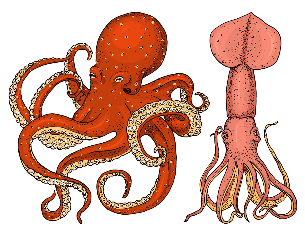 Octopus of inktvis?